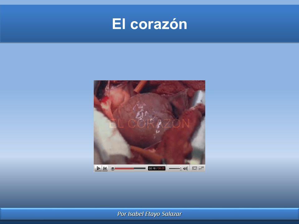 Por Isabel Etayo Salazar El corazón