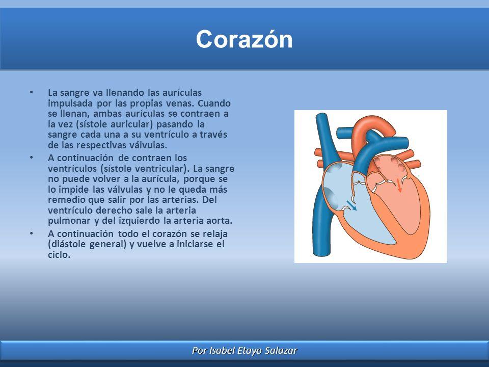Por Isabel Etayo Salazar Corazón La sangre va llenando las aurículas impulsada por las propias venas. Cuando se llenan, ambas aurículas se contraen a