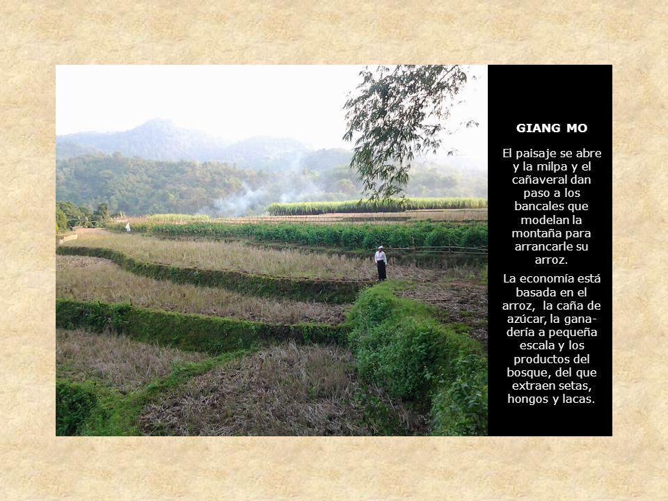 GIANG MO El paisaje se abre y la milpa y el cañaveral dan paso a los bancales que modelan la montaña para arrancarle su arroz.