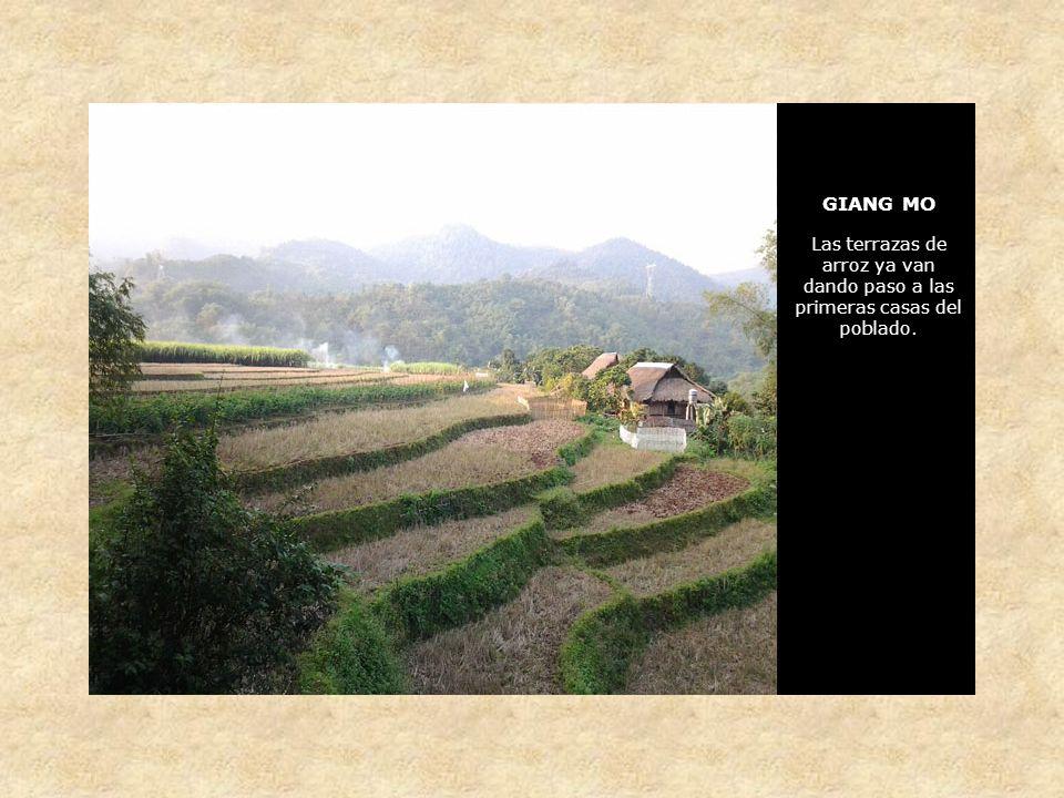 GIANG MO Las terrazas de arroz ya van dando paso a las primeras casas del poblado.