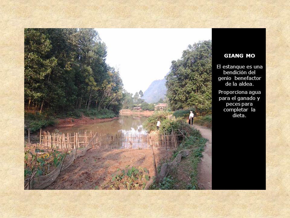 GIANG MO El estanque es una bendición del genio benefactor de la aldea.