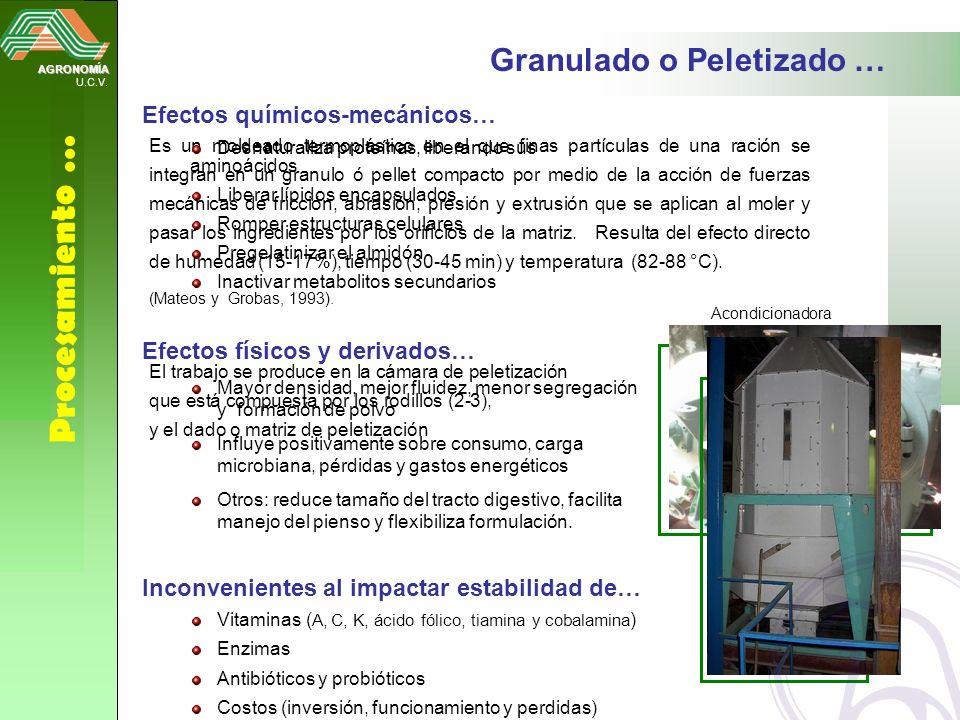 AGRONOMÍA U.C.V. Procesamiento … Granulado o Peletizado … Es un moldeado termoplástico en el que finas partículas de una ración se integran en un gran