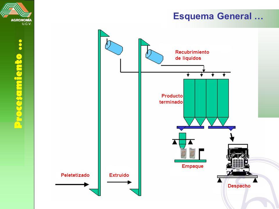 AGRONOMÍA U.C.V. Procesamiento … Esquema General … PeletetizadoExtruido Recubrimiento de líquidos Empaque Despacho Producto terminado