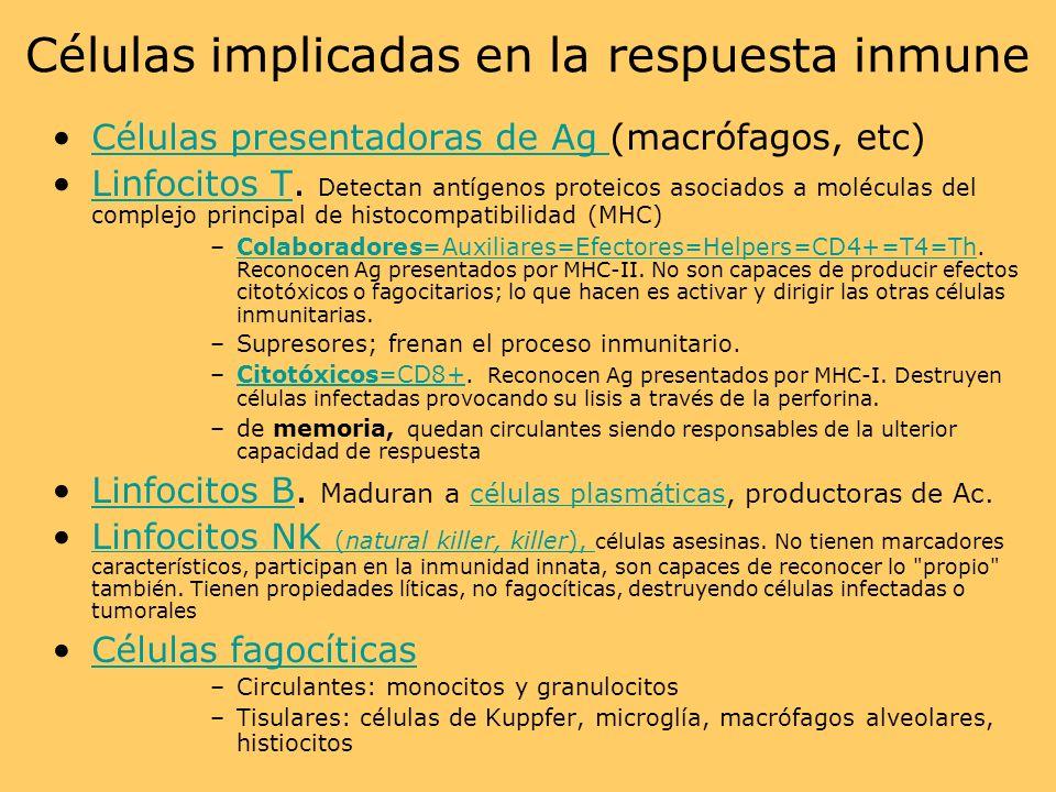 Células implicadas en la respuesta inmune Células presentadoras de Ag (macrófagos, etc)Células presentadoras de Ag Linfocitos T. Detectan antígenos pr