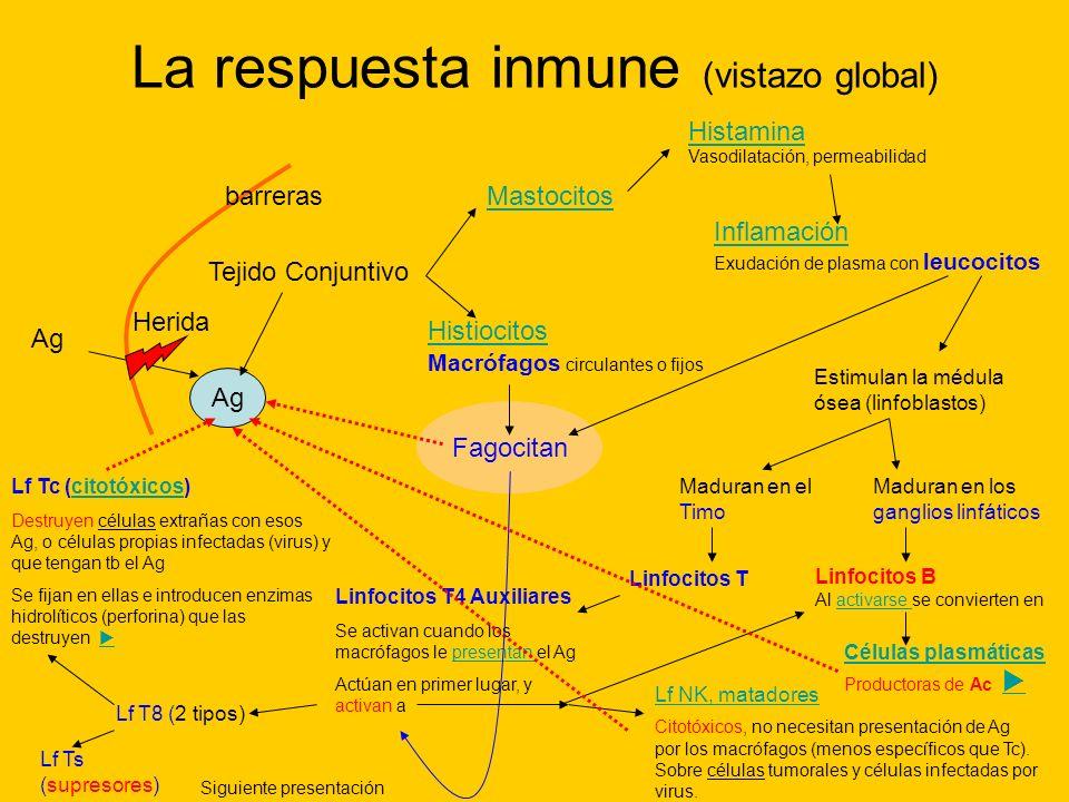 Ag La respuesta inmune (vistazo global) barreras Ag Tejido Conjuntivo Mastocitos Histamina Vasodilatación, permeabilidad Inflamación Exudación de plas