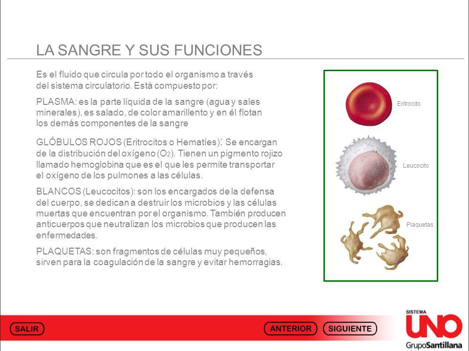 LA SANGRE Y SUS FUNCIONES Es el fluido que circula por todo el organismo a través del sistema circulatorio. Está compuesto por: PLASMA: es la parte lí