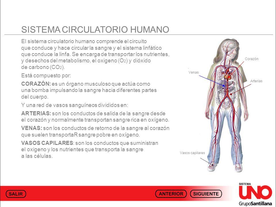 SISTEMA CIRCULATORIO HUMANO El sistema circulatorio humano comprende el circuito que conduce y hace circular la sangre y el sistema linfático que cond