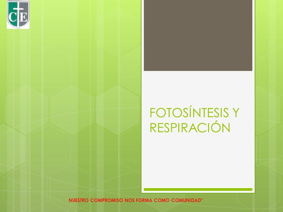 FOTOSINTESIS 1.El agua es absorbida por la raíz NUESTRO COMPROMISO NOS FORMA COMO COMUNIDAD