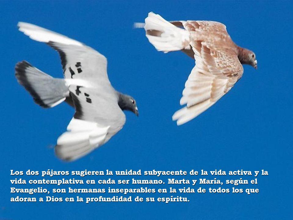 Los dos pájaros sugieren la unidad subyacente de la vida activa y la vida contemplativa en cada ser humano. Marta y María, según el Evangelio, son her