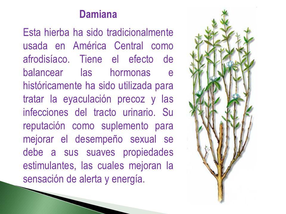 Damiana Esta hierba ha sido tradicionalmente usada en América Central como afrodisíaco. Tiene el efecto de balancear las hormonas e históricamente ha