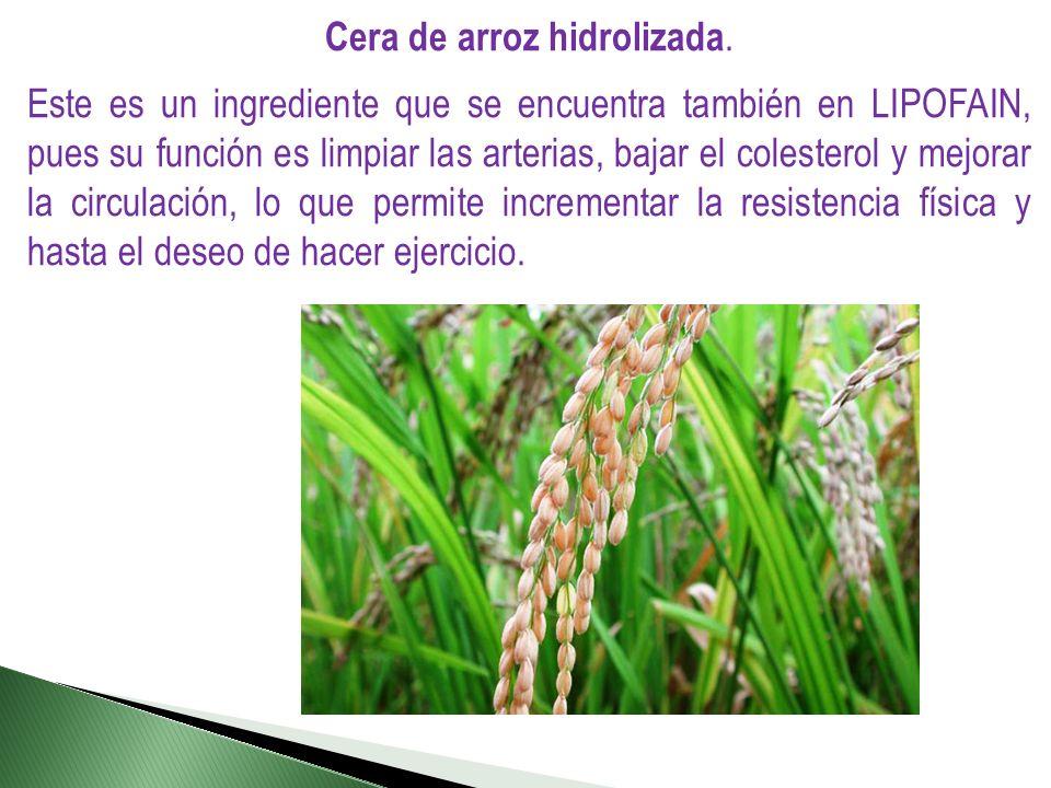 Cera de arroz hidrolizada. Este es un ingrediente que se encuentra también en LIPOFAIN, pues su función es limpiar las arterias, bajar el colesterol y