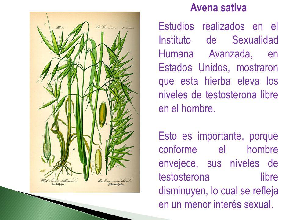 Avena sativa Estudios realizados en el Instituto de Sexualidad Humana Avanzada, en Estados Unidos, mostraron que esta hierba eleva los niveles de test