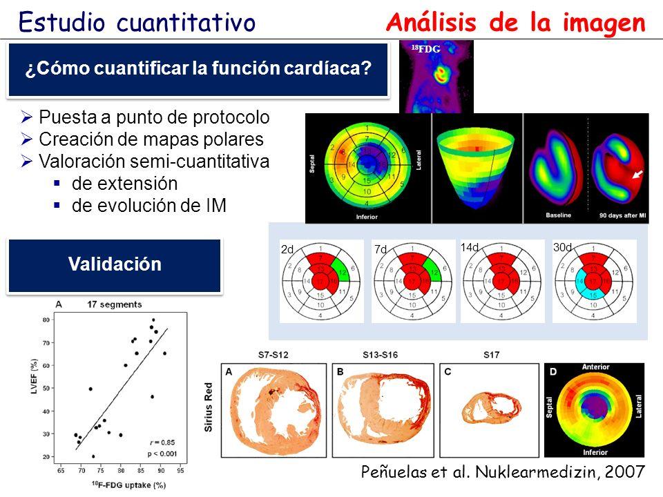 Peñuelas et al. Nuklearmedizin, 2007 Puesta a punto de protocolo Creación de mapas polares Valoración semi-cuantitativa de extensión de evolución de I