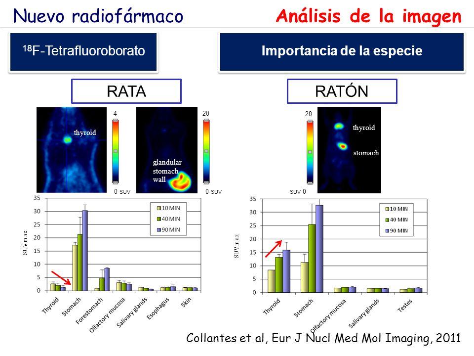 SUVmax 20 SUV 0 thyroid stomach glandular stomach wall 20 0 SUV RATARATÓN 4 0 SUV thyroid Collantes et al, Eur J Nucl Med Mol Imaging, 2011 Nuevo radi