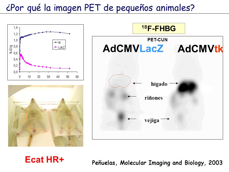 18 F-FHBG riñones vejiga hígado AdCMVLacZ AdCMVtk PET-CUN Peñuelas, Molecular Imaging and Biology, 2003 ¿Por qué la imagen PET de pequeños animales? E