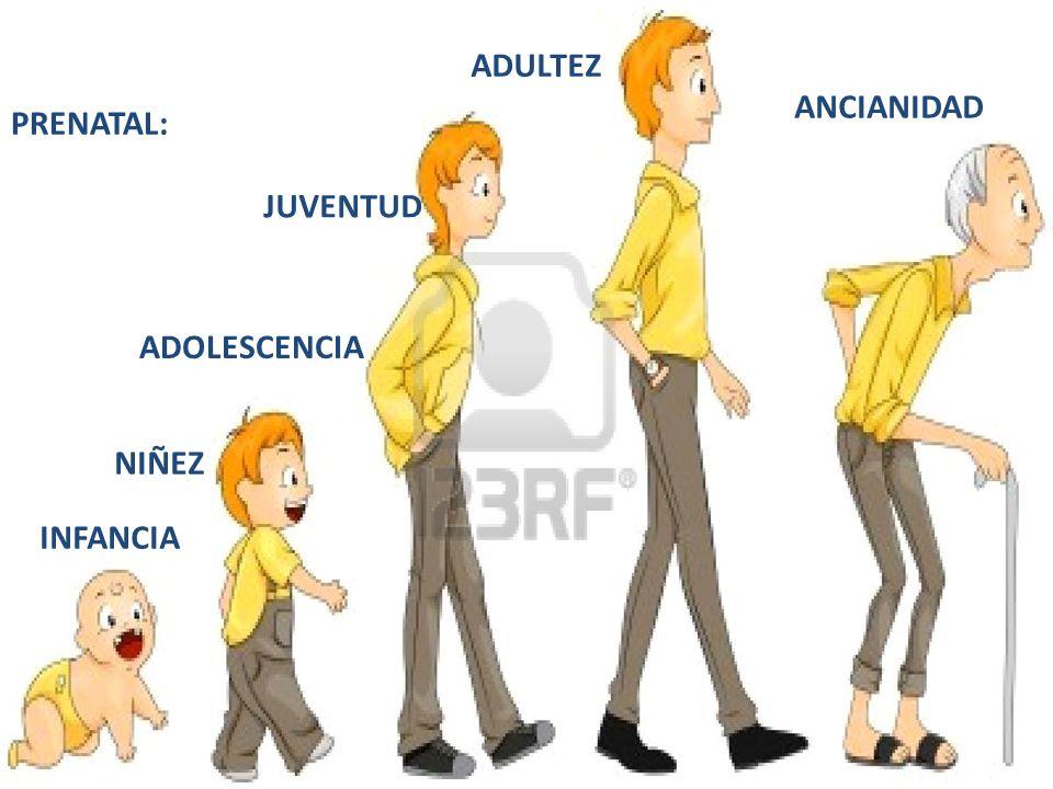 20 PRENATAL: INFANCIA NIÑEZ ADOLESCENCIA JUVENTUD ADULTEZ ANCIANIDAD