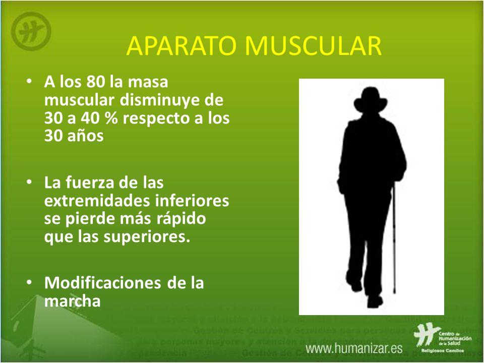 APARATO MUSCULAR A los 80 la masa muscular disminuye de 30 a 40 % respecto a los 30 años La fuerza de las extremidades inferiores se pierde más rápido