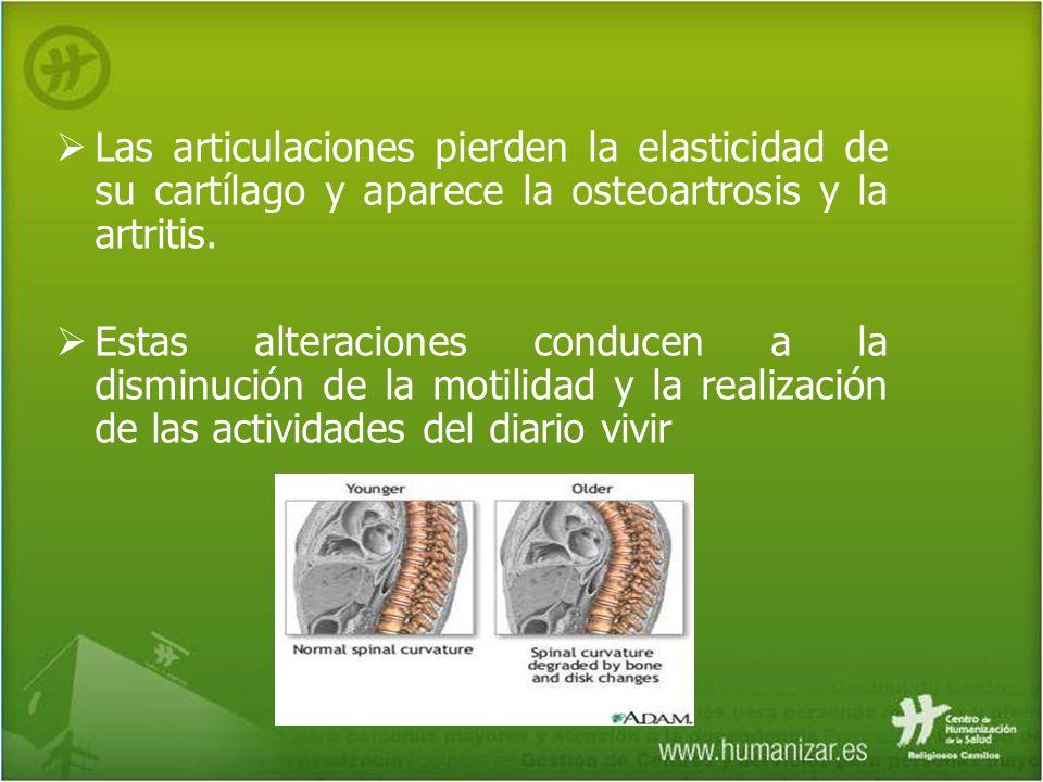 Las articulaciones pierden la elasticidad de su cartílago y aparece la osteoartrosis y la artritis. Estas alteraciones conducen a la disminución de la
