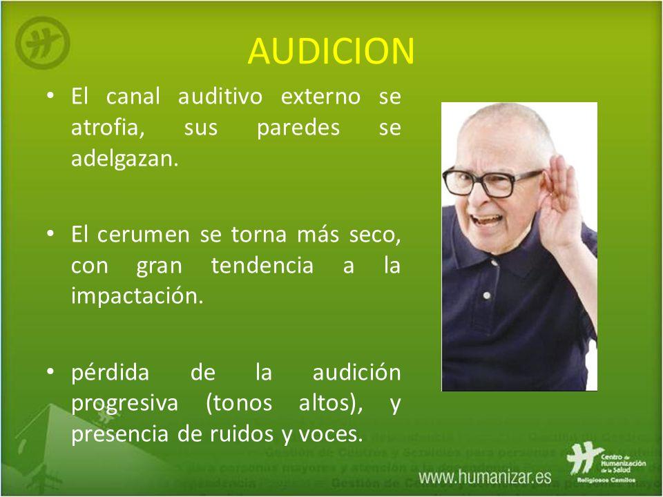 AUDICION El canal auditivo externo se atrofia, sus paredes se adelgazan. El cerumen se torna más seco, con gran tendencia a la impactación. pérdida de