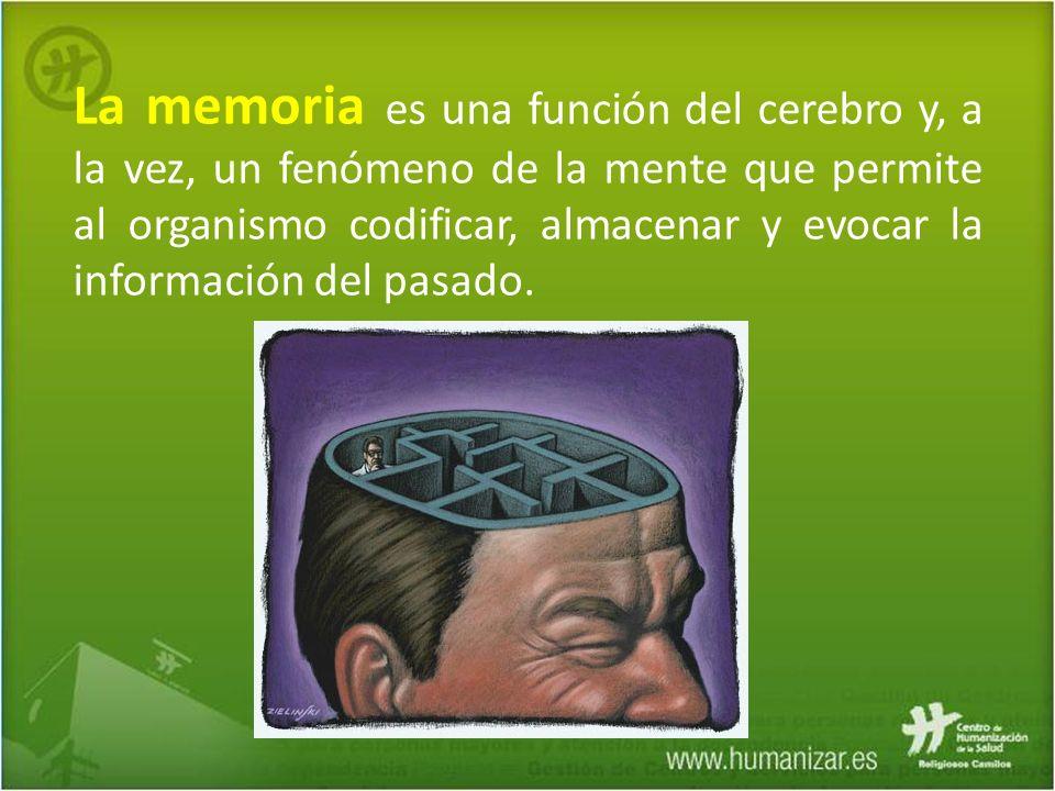 La memoria es una función del cerebro y, a la vez, un fenómeno de la mente que permite al organismo codificar, almacenar y evocar la información del p