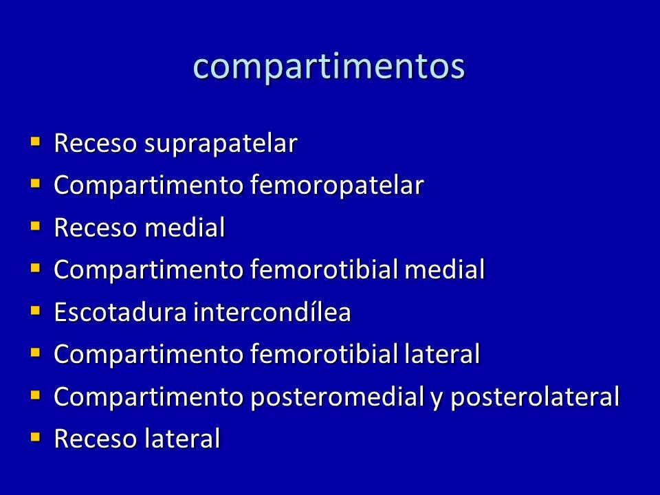 compartimentos Receso suprapatelar Receso suprapatelar Compartimento femoropatelar Compartimento femoropatelar Receso medial Receso medial Compartimen