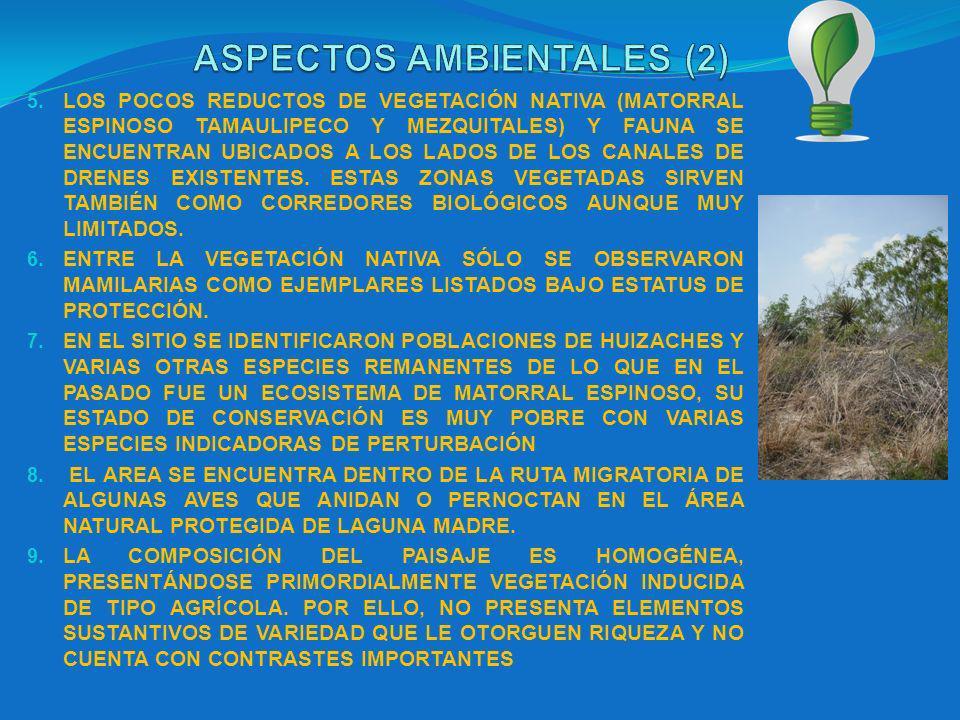 5. LOS POCOS REDUCTOS DE VEGETACIÓN NATIVA (MATORRAL ESPINOSO TAMAULIPECO Y MEZQUITALES) Y FAUNA SE ENCUENTRAN UBICADOS A LOS LADOS DE LOS CANALES DE