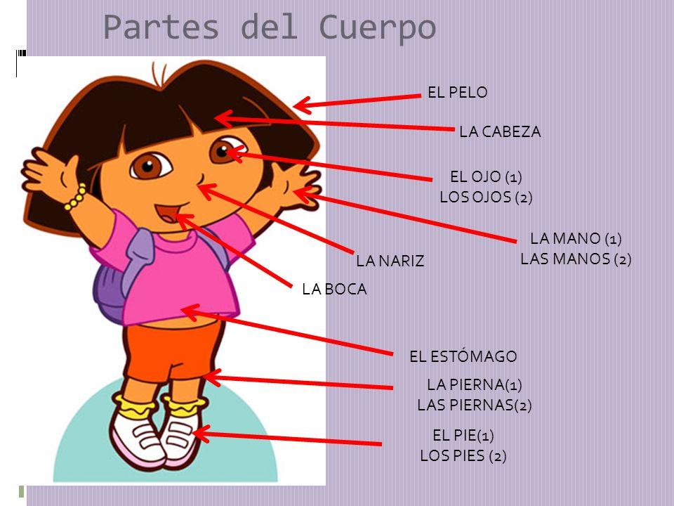 Partes del Cuerpo EL PELO LA CABEZA EL OJO (1) LOS OJOS (2) LA NARIZ LA BOCA LA MANO (1) LAS MANOS (2) EL ESTÓMAGO EL PIE(1) LOS PIES (2) LA PIERNA(1) LAS PIERNAS(2)