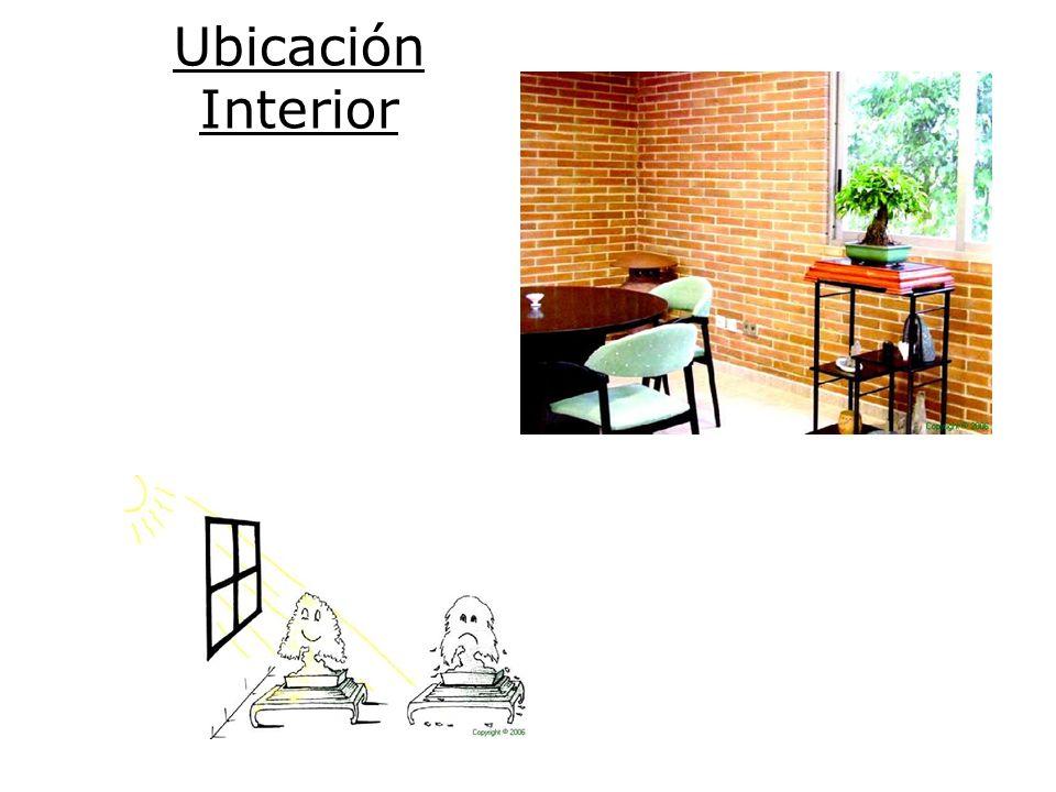 Factores importantes de la ubicación interior Elección de especies apropiadas Cercanía de la ventana (luz solar) Evitar el efecto lupa Evitar las fuentes directas de calor o frío Pulverizaciones periódicas Humedad ambiente elevada