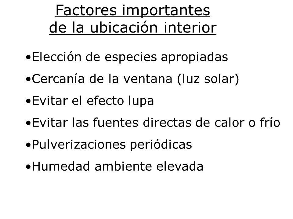 Factores importantes de la ubicación interior Elección de especies apropiadas Cercanía de la ventana (luz solar) Evitar el efecto lupa Evitar las fuen