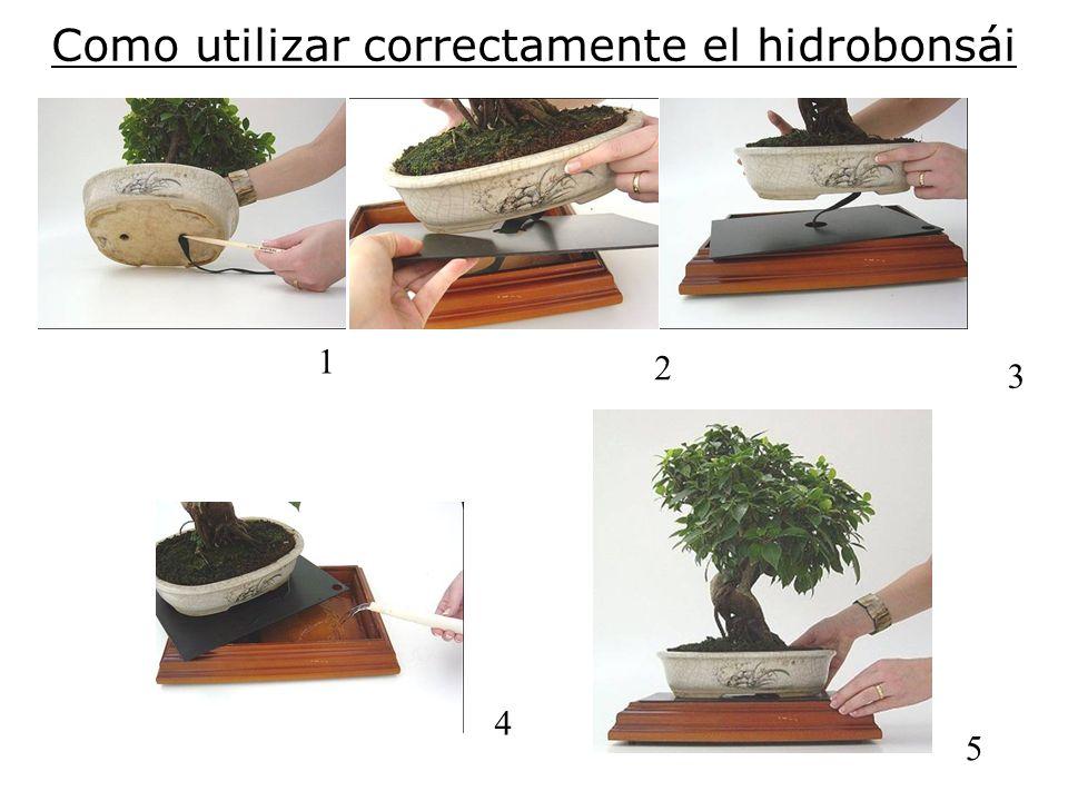Como utilizar correctamente el hidrobonsái 1 2 3 4 5