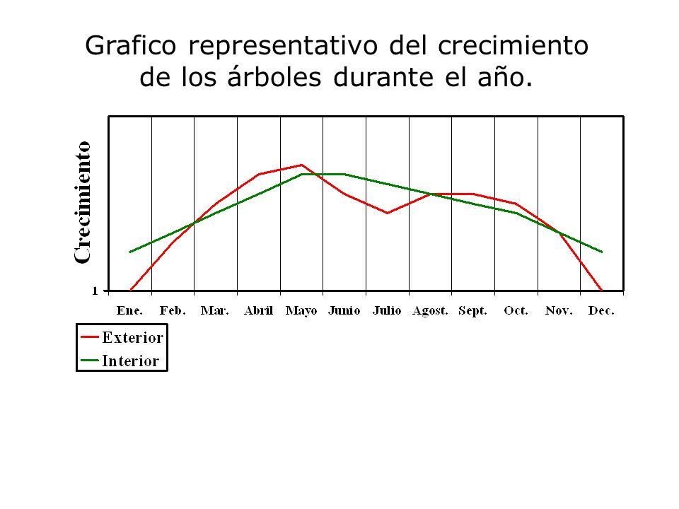 Grafico representativo del crecimiento de los árboles durante el año.
