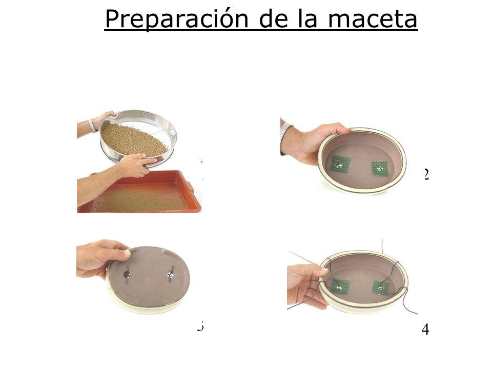 Preparación de la maceta 12 3 4