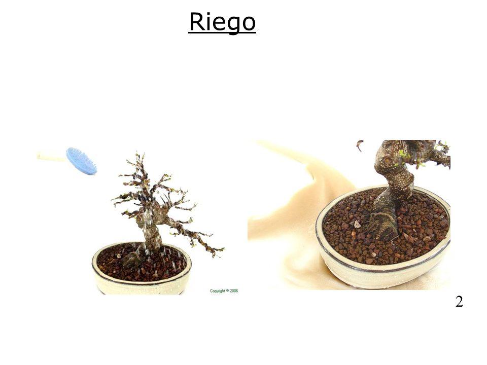 Riego 1 2