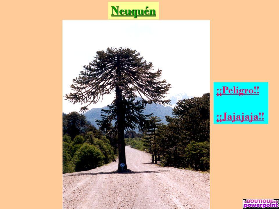 Neuquén – Lago Lolog O b s i d i a n a