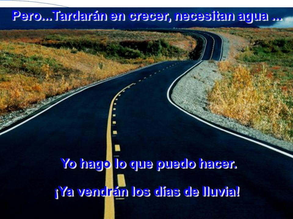 Pero las semillas caen encima del asfalto, las aplastan los coches, se las comen los pájaros...