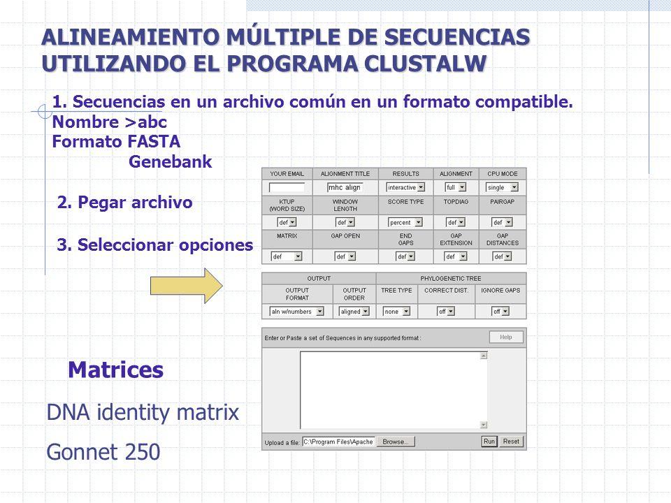 ALINEAMIENTO MÚLTIPLE DE SECUENCIAS UTILIZANDO EL PROGRAMA CLUSTALW 1. Secuencias en un archivo común en un formato compatible. Nombre >abc Formato FA