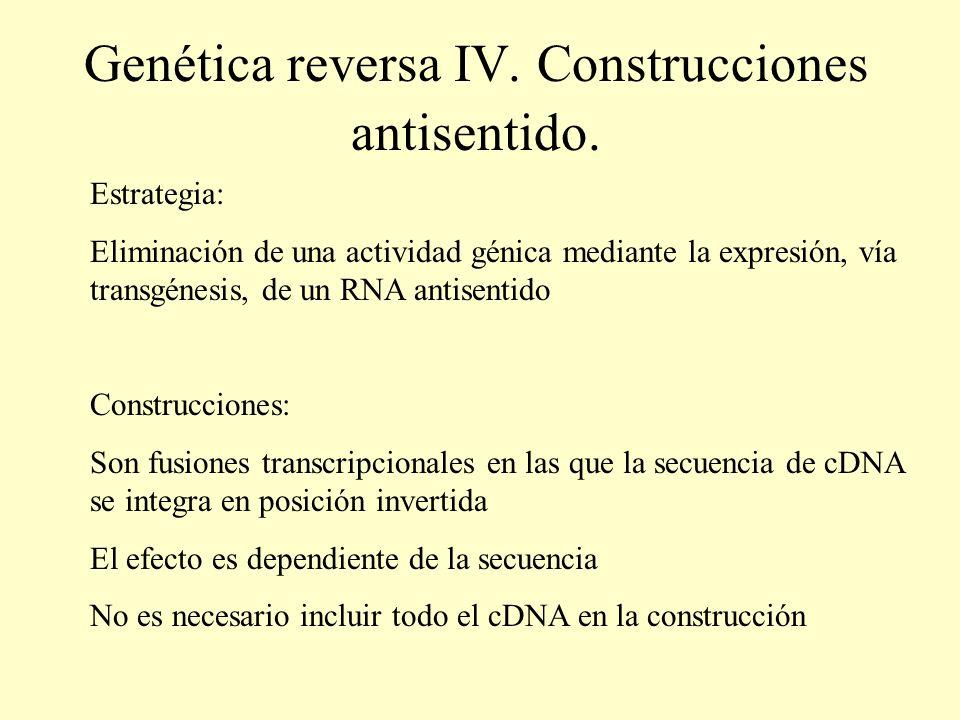 Genética reversa IV. Construcciones antisentido. Estrategia: Eliminación de una actividad génica mediante la expresión, vía transgénesis, de un RNA an