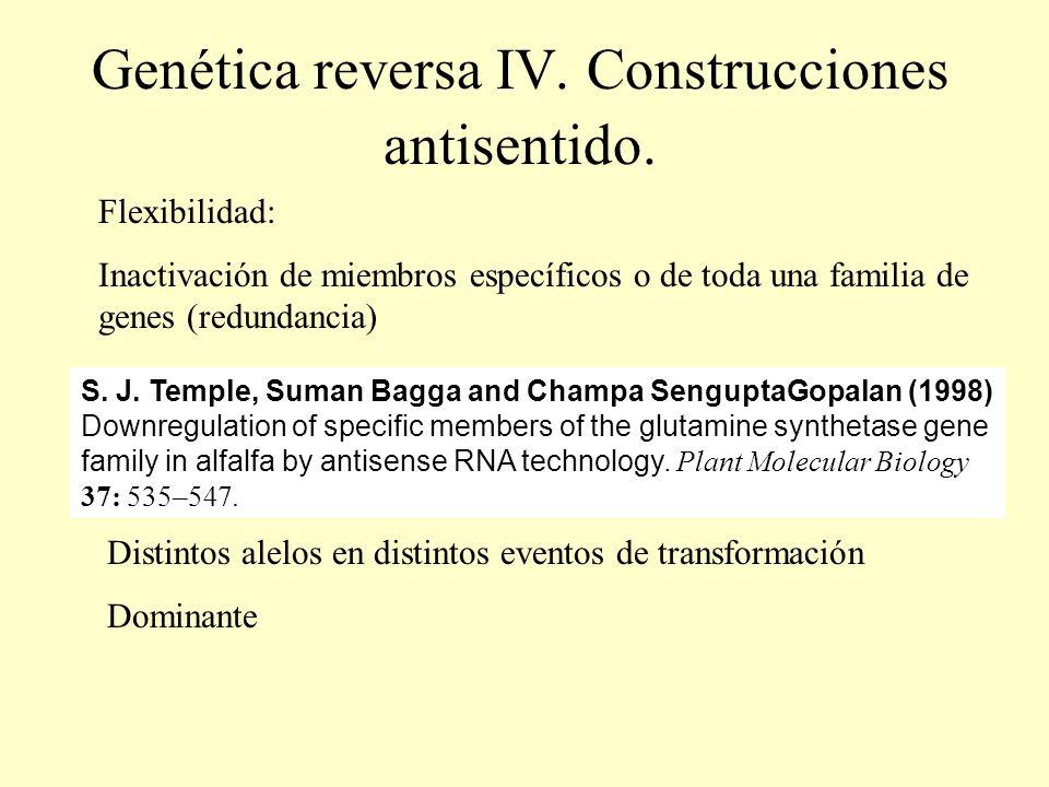 Genética reversa IV. Construcciones antisentido. Flexibilidad: Inactivación de miembros específicos o de toda una familia de genes (redundancia) S. J.