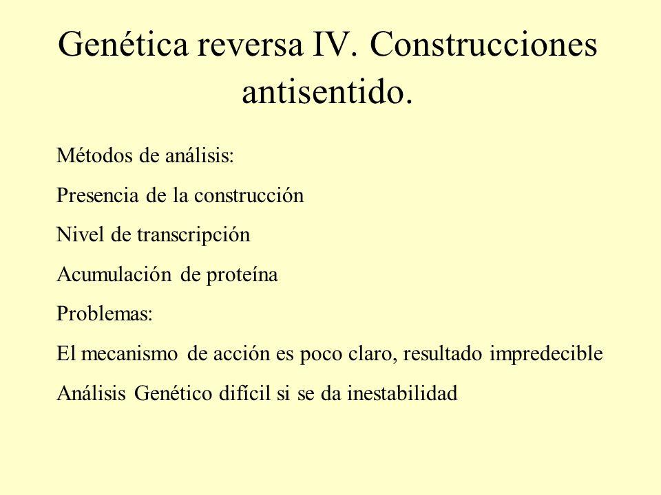 Genética reversa IV. Construcciones antisentido. Métodos de análisis: Presencia de la construcción Nivel de transcripción Acumulación de proteína Prob