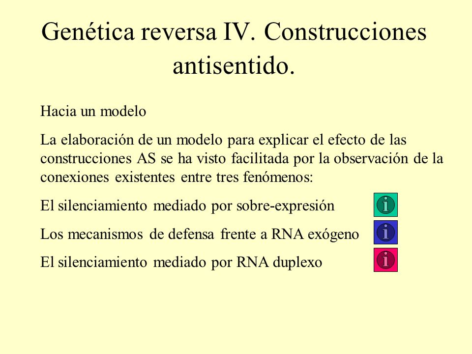 Genética reversa IV. Construcciones antisentido. Hacia un modelo La elaboración de un modelo para explicar el efecto de las construcciones AS se ha vi