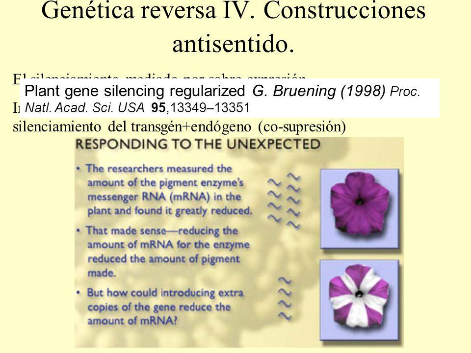 Genética reversa IV. Construcciones antisentido. El silenciamiento mediado por sobre-expresión Intentos de sobre-expresión de un gen da lugar a veces