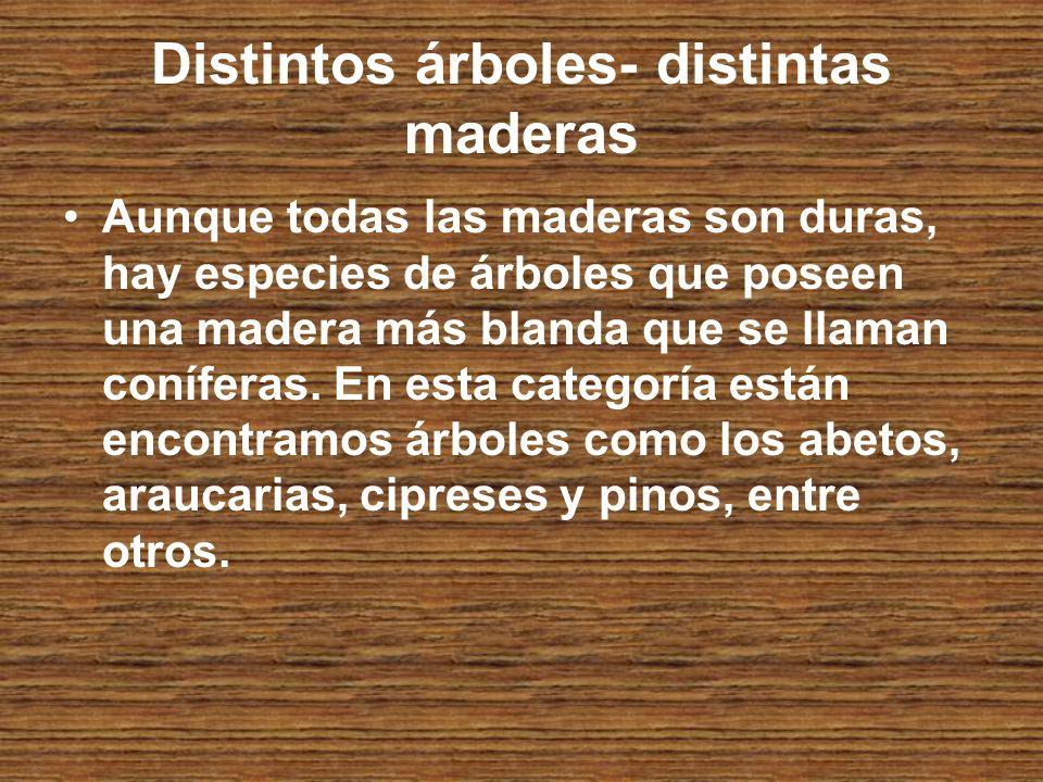 Distintos árboles- distintas maderas Aunque todas las maderas son duras, hay especies de árboles que poseen una madera más blanda que se llaman coníferas.