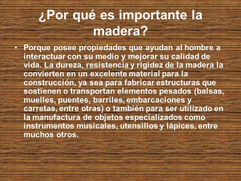 ¿Por qué es importante la madera.