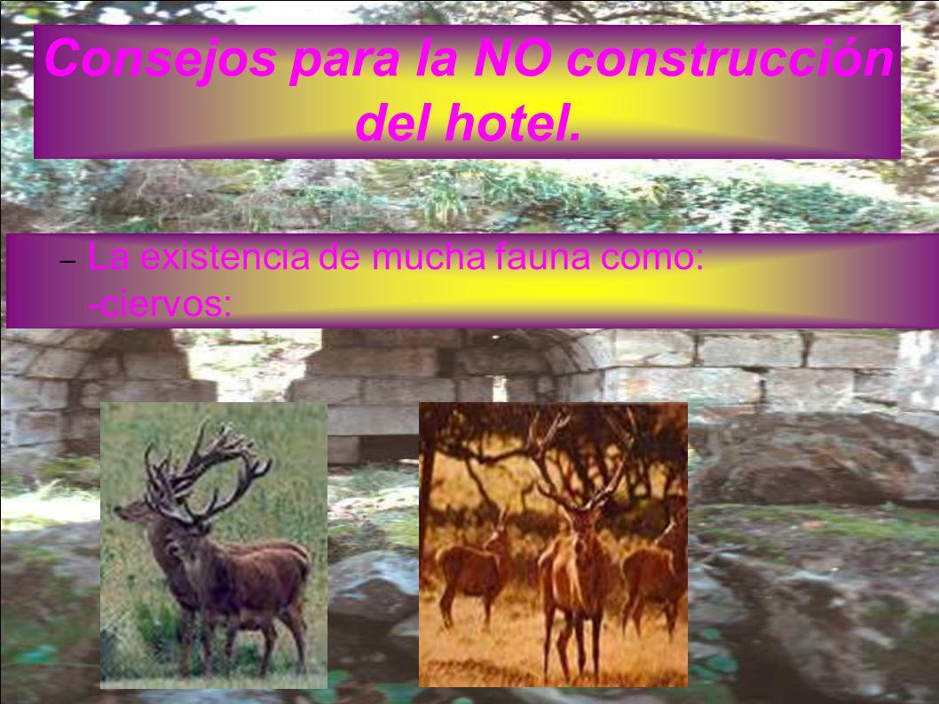 Consejos para la NO construcción del hotel. – La existencia de mucha fauna como: -ciervos: