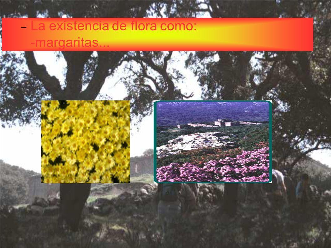 – La existencia de flora como: -margaritas...