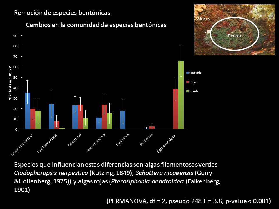 Remoción de especies bentónicas Afuera Eje Denrto (PERMANOVA, df = 2, pseudo 248 F = 3.8, p-value < 0,001) Cambios en la comunidad de especies bentónicas Especies que influencian estas diferencias son algas filamentosas verdes Cladophoropsis herpestica (Kützing, 1849), Schottera nicaeensis (Guiry &Hollenberg, 1975)) y algas rojas (Pterosiphonia dendroidea (Falkenberg, 1901)
