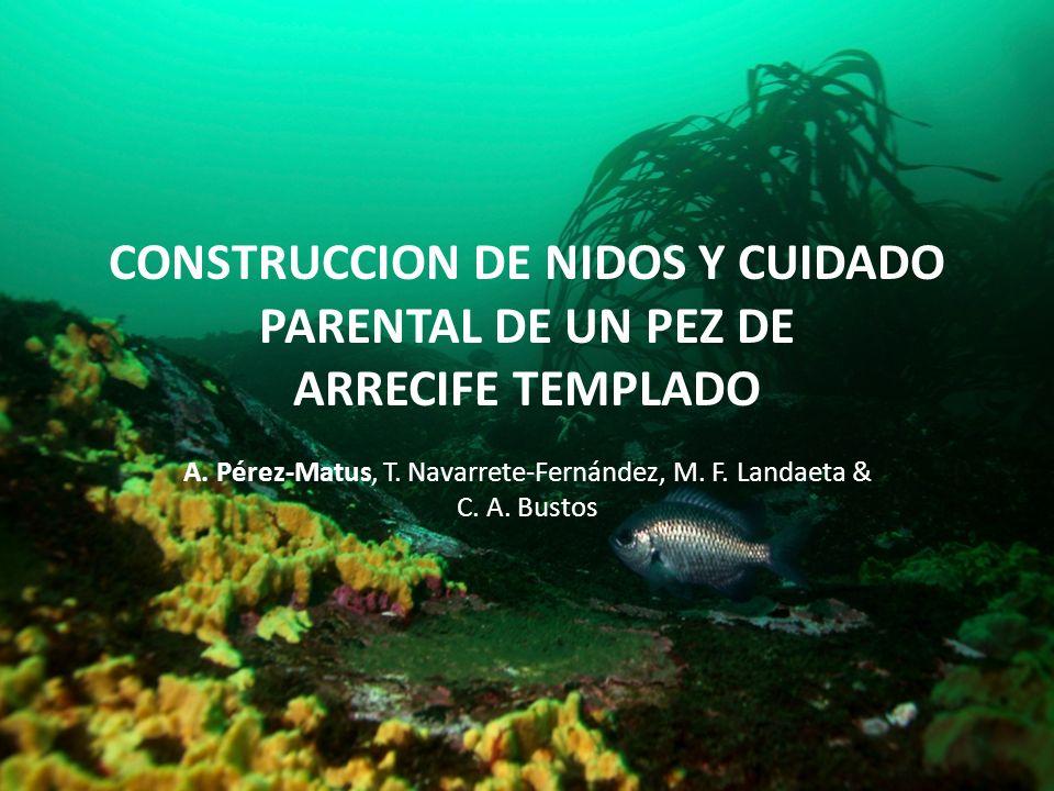 CONSTRUCCION DE NIDOS Y CUIDADO PARENTAL DE UN PEZ DE ARRECIFE TEMPLADO A. Pérez-Matus, T. Navarrete-Fernández, M. F. Landaeta & C. A. Bustos