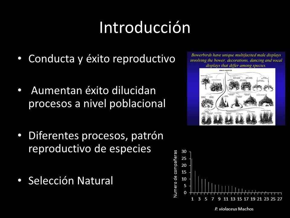 Introducción Conducta y éxito reproductivo Aumentan éxito dilucidan procesos a nivel poblacional Diferentes procesos, patrón reproductivo de especies Selección Natural P.