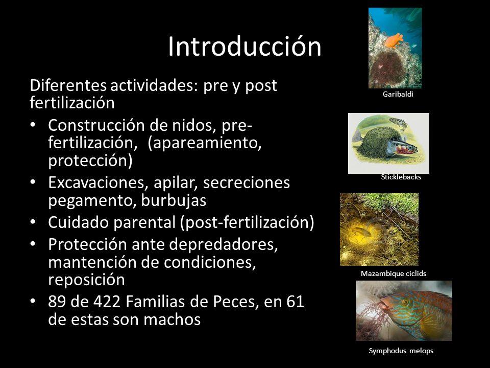 Introducción Diferentes actividades: pre y post fertilización Construcción de nidos, pre- fertilización, (apareamiento, protección) Excavaciones, apilar, secreciones pegamento, burbujas Cuidado parental (post-fertilización) Protección ante depredadores, mantención de condiciones, reposición 89 de 422 Familias de Peces, en 61 de estas son machos Garibaldi Sticklebacks Mazambique ciclids Symphodus melops