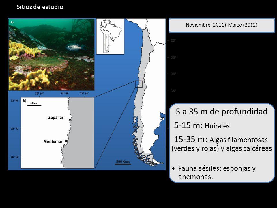 Sitios de estudio Noviembre (2011)-Marzo (2012) 5 a 35 m de profundidad 5-15 m: Huirales 15-35 m: Algas filamentosas (verdes y rojas) y algas calcáreas Fauna sésiles: esponjas y anémonas.